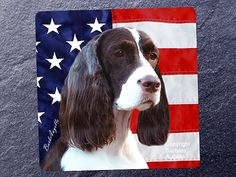 English Springer Spaniel Liver & White Patriotic Coasters by Barbara Augello for Dogimage