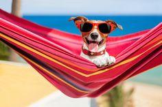So kann man die heißen Tage und trägen Sommerabende richtig genießen. #hitze #sommer #sonne #vidensus #hitzewelle