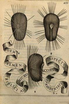 Flora seu de florum cultura libri IV