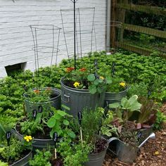 Reuse old trashcans, buckets & tubs ~ make them into a kitchen garden!