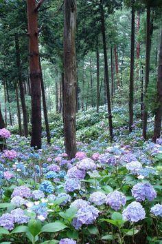 17 Dreamy Hydrangea Gardens That Are Giving Us Major Inspiration - Southern Living Hydrangea Landscaping, Hydrangea Garden, Garden Landscaping, Hydrangeas, Beautiful Gardens, Beautiful Flowers, Gras, Shade Garden, Lawn And Garden