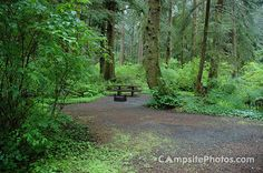 Mora Campground, Forks WA. Camp here, surf LaPush, hike the 9-mile Sand Point Loop.