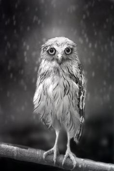 """""""Standing in the rain..."""" by Sham Jolimie 