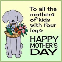 Happy Mothers Day to all Animal Mommies...   =)