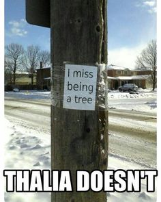 Guess who doesn't miss being a tree!?