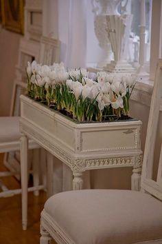 love this idea - plant the crocus inside for an indoor garden