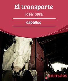 El #transporte ideal para caballos  El transporte ideal para caballos es #habitual por cuestiones deportivas, de cría, entrenamiento o controles veterinarios, entre otras. Muchas veces se vuelve una tarea delicada, especialmente cuando causa #problemas de estrés o ciertos traumatismos en el animal.