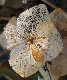 "What I like to call Organic Lace. Nature's pure art is divine and unmatched. ""Spotted in a friends garden, dead flowers can still be pretty!"" Photo by Sally Dunn."