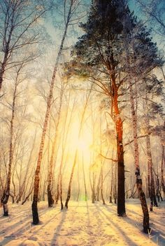 Light in winter