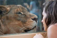 Lara With A Tiger