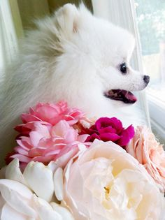 Just substitute Lola and that will be a picture of my wedding day... I even like the flowers!