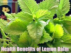 Lemon Balm a Powerful Herb