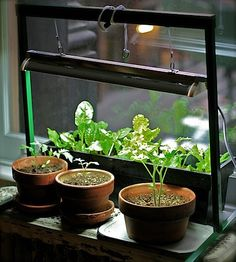grow lights that fit on windowsills