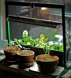 Apartment Garden: How to Grow an Indoor Herb or Vegetable Garden