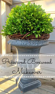 """DIY INSTRUCTIONS. (Also read: """"How to Preserve Boxwood at: http://www.wikihow.com/Preserve-Boxwood-Cuttings)"""