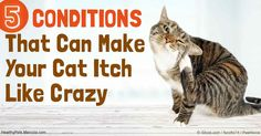 To successfully alleviate your cat's itchiness, it's imperative to accurately identify and treat the underlying cause. Know the 5 conditions that can make them itch. http://healthypets.mercola.com/sites/healthypets/archive/2016/11/22/cat-itching.aspx