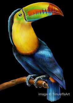 Toucanl Colored Pencil Drawing With Tombow Irojiten Pencils By TimJeffsArt On Etsy