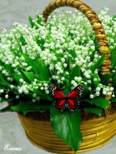 gif anime fleurs - Page 3 Beautiful Gif, Beautiful Pictures, Lily Of The Valley Flowers, Birthday Wishes For Myself, Language Of Flowers, Photocollage, Glitter Graphics, Gif Animé, Flower Basket