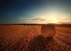 hay field - Google Search