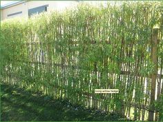 living hedge fence   Living Willow Hedge   Garden fences, walls & gates