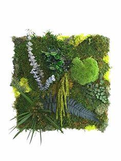 Amazon Fr, Cactus Plants, Garden Ideas, Natural, Design, Art, Home Ideas, Art Background, Cacti