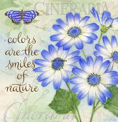 Lang calendar, art by Jane Shasky. colors are the smile of nature... cineraria