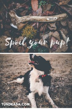 Rustic Gifts for outdoorsy pups! Have a look at our antler dog chews that come in all sizes and antler doggie name tags that are durable and safe for your pup! Rustic Gifts, Dog Chews, Aussies, Pup, Dog Cat, Tags, Amazon, Board, Prints