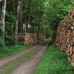 Wondering what to do with the forest acreage on your homestead? Learn all about selling timber, splitting and stacking wood, burning with wood, and selecting a chainsaw, a log splitter and a chipper-shredder. Stacking Firewood, Stacking Wood, Best Wood For Burning, Wood Burning, Best Chainsaw, Splitting Wood, Bandsaw Mill, Lumber Mill, Electric Saw