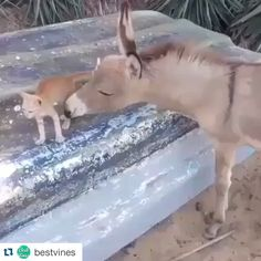 The donkey and the cat became friends - Animated GIF Cute Wild Animals, Baby Animals Pictures, Animals And Pets, Funny Animals, Dog Pictures, Animal Fails, Funny Animal Videos, Animal Rescue Shelters, Horses
