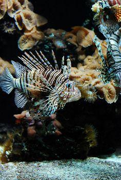 171\365. Beautiful fish | Flickr – Compartilhamento de fotos!