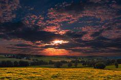 field after field by John Palmer