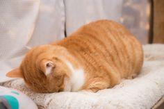 Cute Memes, Cat Love, Animal Kingdom, Pet Birds, Neko, Cute Cats, Dog Cat, Kittens, Cute Animals