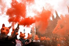 Anti-fox hunting protestors demonstrate outside Parliament