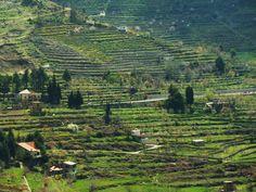LEBANON, BEAUTIFUL GREEN LANDSCAPE..LOVE THE TERRACES