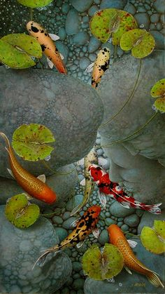 Terry Gilecki is a highly aclaimed painter of the beautiful Koi fish and the surreal world they live in. Coi Fish, Koi Fish Pond, Koi Ponds, Koi Fish Drawing, Fish Drawings, Koi Art, Fish Art, Animal Paintings, Paintings For Sale