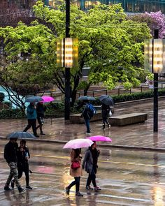 Spring In Your Step Rain on Robson Square just outside the Vancouver Art Gallery. Captured in Vancouver British Columbia Canada Another from March 23 2016
