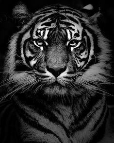 black and white wildlife still have such a starkness of purity that colors can't capture, imagination?