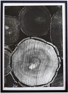 1 Affiche Poster Nature Troncs d'Arbres Ligne de vie et Ecorce Photo Noir et…