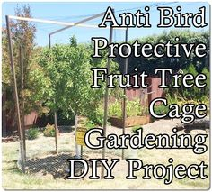 Anti Bird Protective Fruit Tree Cage Gardening DIY Project Homesteading - The Homestead Survival .Com