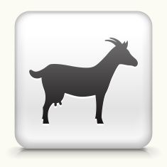 Square Button with Goat royalty free vector art vector art illustration