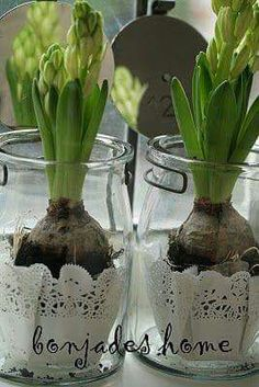 Bol … Bol …,easter Bol Mehr Related posts:How to Grow Beets from Seed to Harvest - GardeningLearn & Grow: Spring Garden, Starting Seeds, Prepping for Spring Deco Floral, Arte Floral, Deco Table Noel, Spring Bulbs, Planting Bulbs, Bulb Flowers, Spring Has Sprung, Garden Styles, Christmas Inspiration