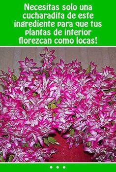 Necesitas solo una cucharadita de este ingrediente  para que tus plantas de interior florezcan como locas!