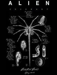 Remember these Facehugger designs for a poster and crew clothing? At the time, I said they put me in mind of an ancient Anatomical Manuscript!