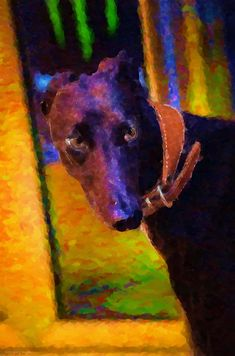 Portrait Of A Portuguese Dog by Mary Machare