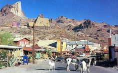 Be sure to stop in Oatman, AZ, a tiny town overrun with friendly burros left over from it's mining days.
