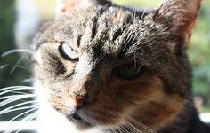 [Verlosung] Felix-Futterpakete anlässlich des Umarme-Deine-Katze-Tag am 4.Juni | Tarisa testet