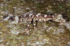 Trois nouvelles espèces vivantes découvertes en Australie
