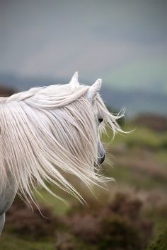 The mane, the horse, love it all!
