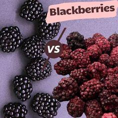 Freeze Dried Fruit, Freeze Drying, Blackberries, Brother, Frozen, Cookies, Chocolate, Big, Desserts