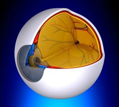 Dry Macular Degeneration Clinical Trials - Macular degeneration research is discovering new and earlier treatment for dry age related macular degeneration. Macular Degeneration Treatment, Saffron Benefits, Gene Therapy, The Retina, Healthy Eyes, Eye Drops, Oxidative Stress, First Humans, Blood Vessels